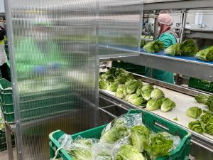 Barreras Sanitarias con Macrolux Multiwall en la Industria Alimenticia